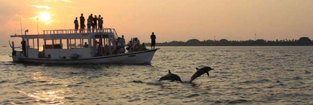 dolphin trip goa